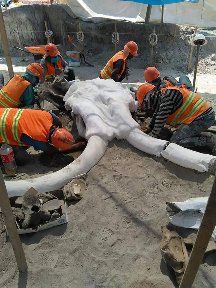 De junio a agosto se ha triplicado el hallazgo de restos fósiles en Santa Lucía