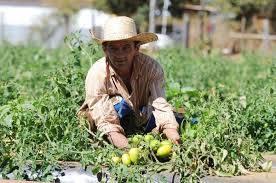 Agricultura realiza foro para incrementar las exportaciones de productos agroalimentarios a Japón