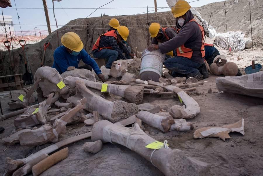 Santa Lucía se convierte en el lugar con más restos de mamuts hallados en el mundo