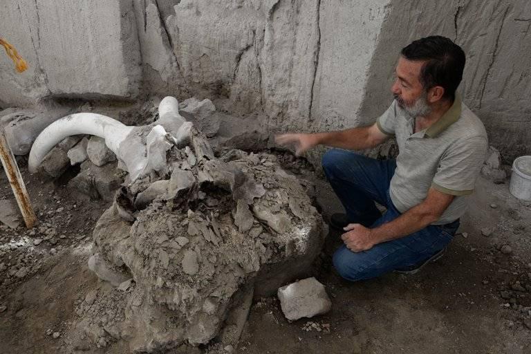 Suman 200 mamuts hallados en terrenos del aeropuerto de Santa Lucía