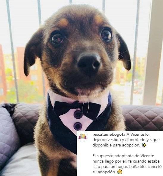 Perrito que dejaron plantado el día de su adopción se convierte en tendencia