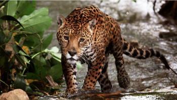El mundo perdió 70% de la fauna salvaje  en 50 años: Fondo Mundial para la Naturaleza