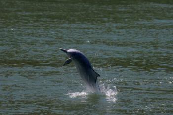 Delfines jorobado en Hong Kong por confinamiento por Covid-19