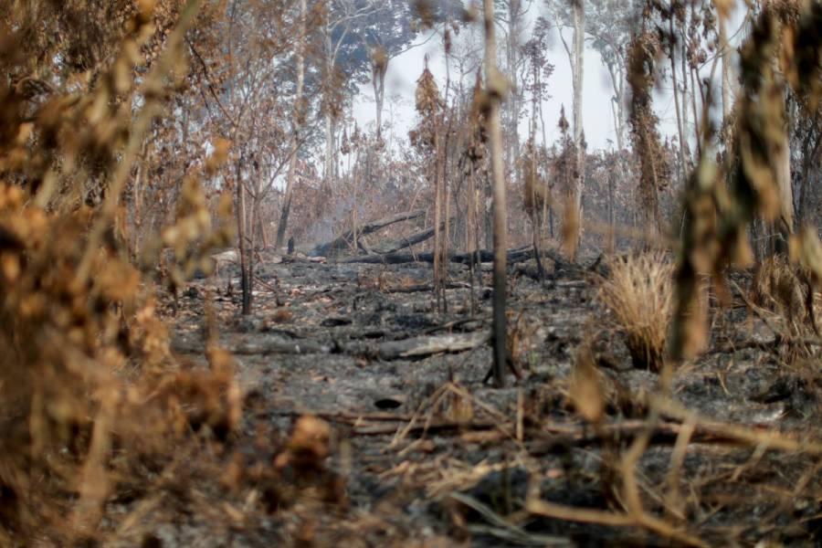 Países europeos instan a Brasil a tomar medidas contra la deforestación del Amazonas