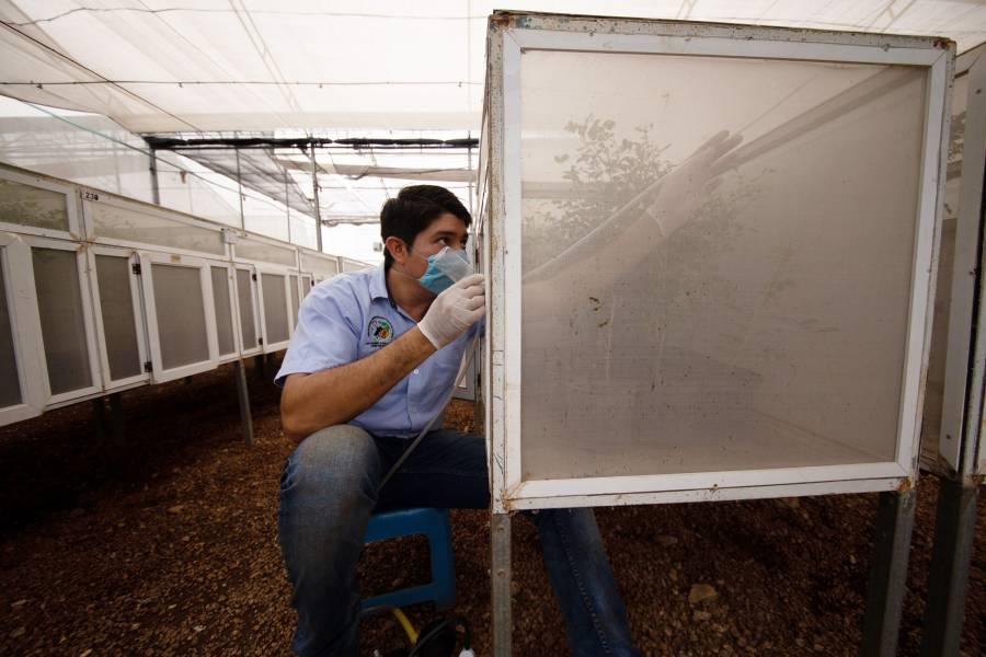 Reconocen labor a México y países latinoamericanos para abastecer alimentos durante contingencia sanitaria