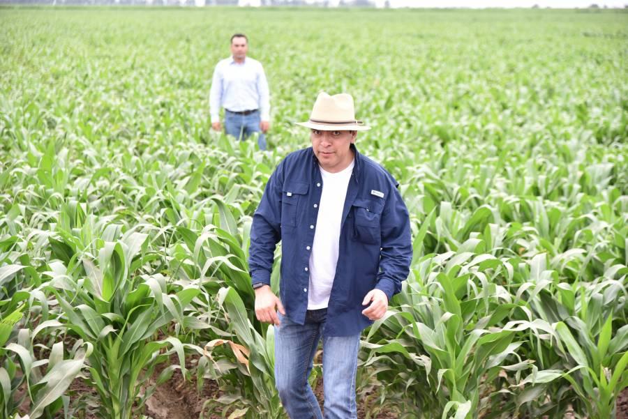 Más maíz en menos espacio, ofrecen mexicanos de Bayer