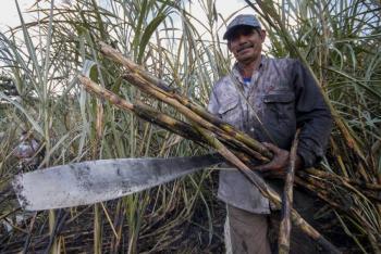 Derecho al consumo básico de azúcar coartado por datos falsos