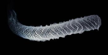 Las esponjas marinas podrían inspirar la arquitectura del futuro