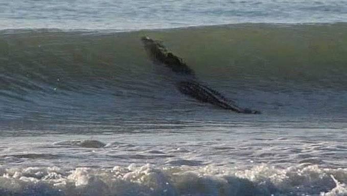 Fotos: Un cocodrilo nada en una playa de Acapulco