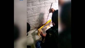 Video: Víbora de cascabel muerde a paciente en hospital de la alcaldía Tláhuac