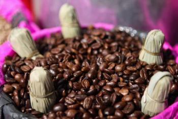 En Puebla, Starbucks dona 111 mil plantas de café a productores