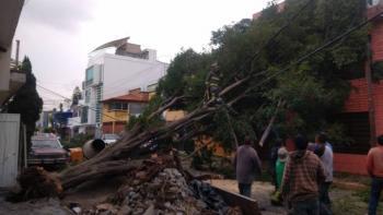 Árbol cae en la alcaldía Gustavo A. Madero, afecta cableado