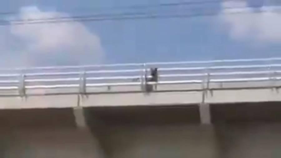 Video: Invade perro vías del Tren Ligero de Guadalajara