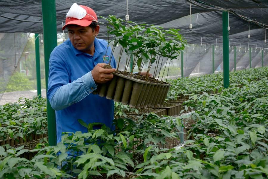 México comparte programas sociales en Centroamérica; busca hacer frente a la crisis migratoria