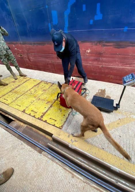 Autoridades decomisan 37 kilos de cocaína procedente de Colombia en Lázaro Cárdenas