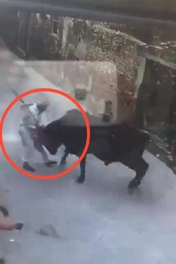 Video: Toro se defiende ante ataque