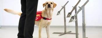 Podrían canes detectar personas con Covid en Sonora
