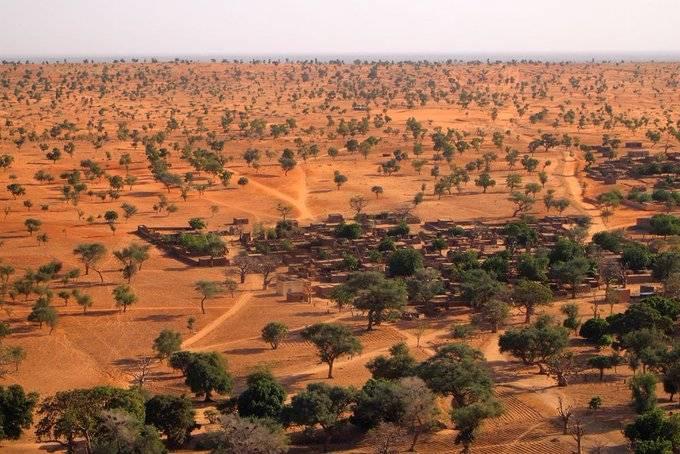 Hallan millones de árboles en el desierto del Sahara
