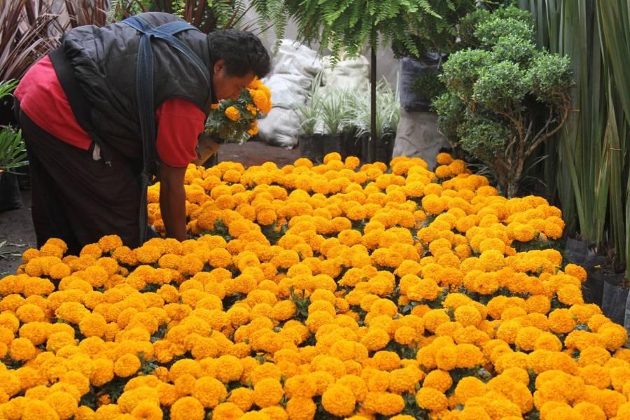 Promueve SEDEMA flor de cempasúchil