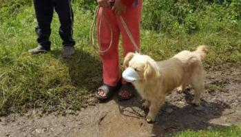 Perrito con cubrebocas se vuelve viral