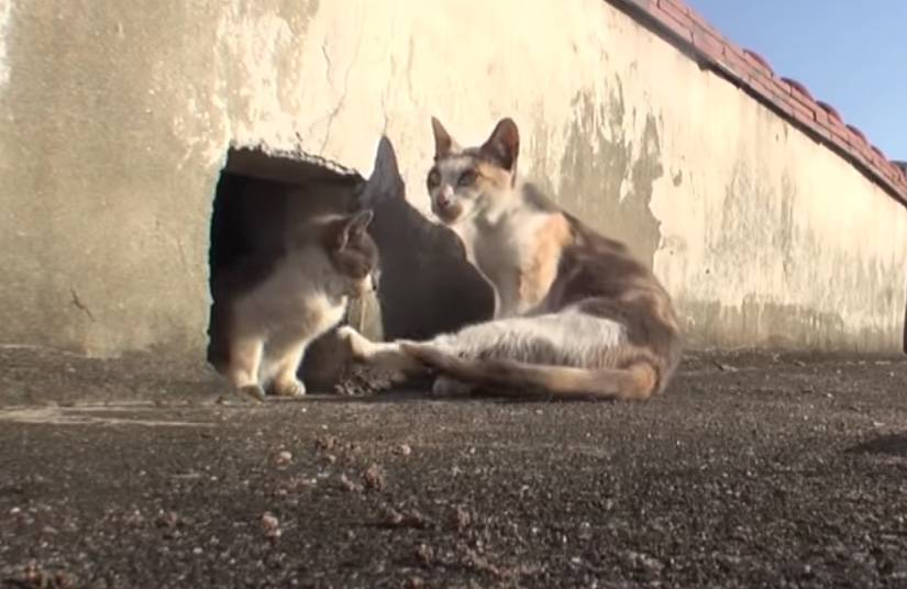 Mamá gata enternece las redes al cuidar a su cría con discapacidad