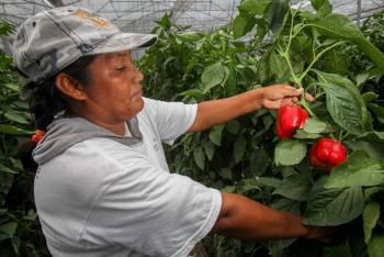 """""""Se pone orden en presupuesto al sector agropecuario"""": AMLO"""