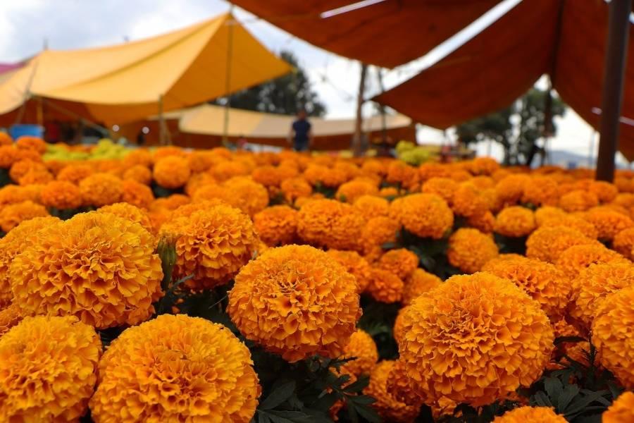 Inicia venta de flores de cempasúchil cultivadas por reclusos de la CDMX