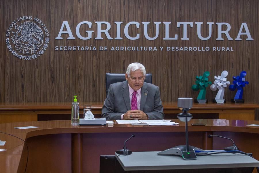 Agricultura activa esquemas de financiamiento y crédito para productores de granos básicos