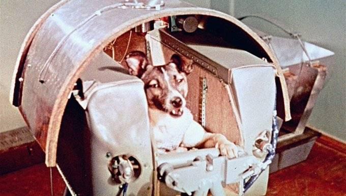 Una perrita que murió en el espacio, se llamaba Laika