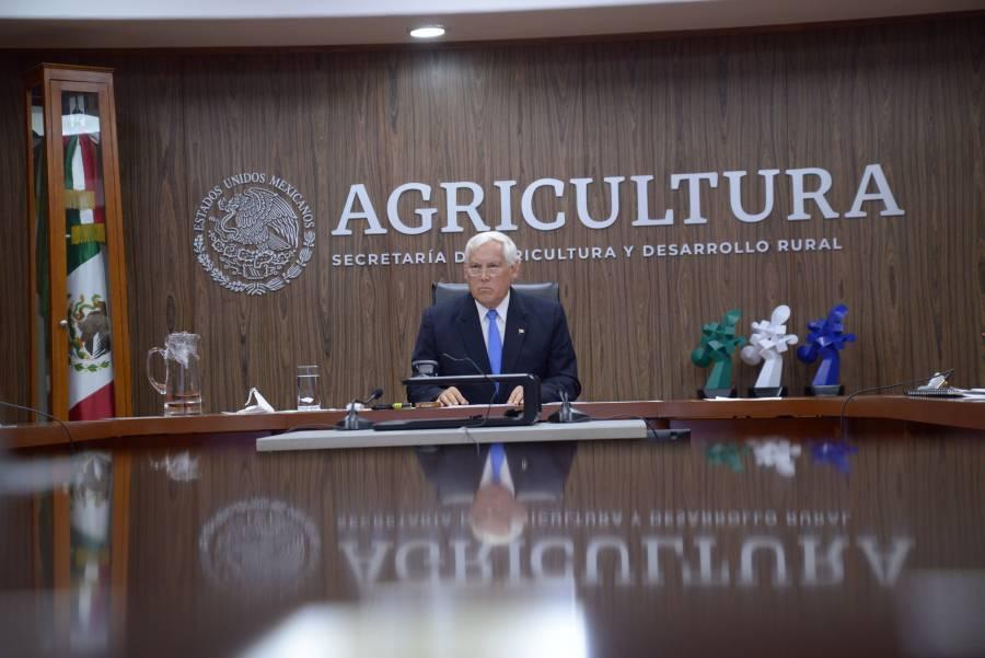 Garantizada producción de granos: Villalobos