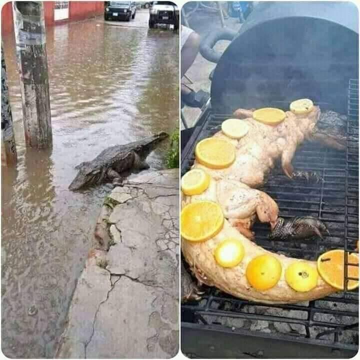 Tabasqueños se alimentan de Cocodrilos por inundaciones