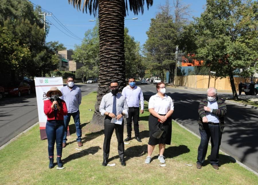Alcaldía Miguel Hidalgo, inicia trabajos para el rescate de palmeras