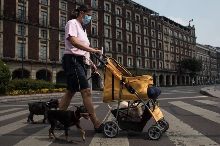 BBVA ofrece vía digital seguro para mascotas