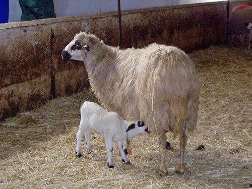 Inhibe Agricultura uso de sustancias prohibidas en alimentación de ganado