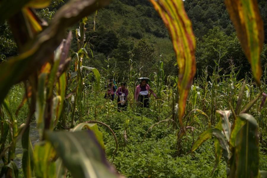 Hay becas en la escuela Agrícola Panamericana Zamorano, Edomex lanza convocatoria