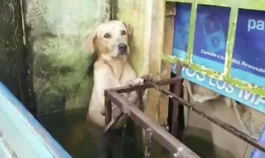 VIDEO: Semar adopta a perro rescatado tras inundación en Tabasco