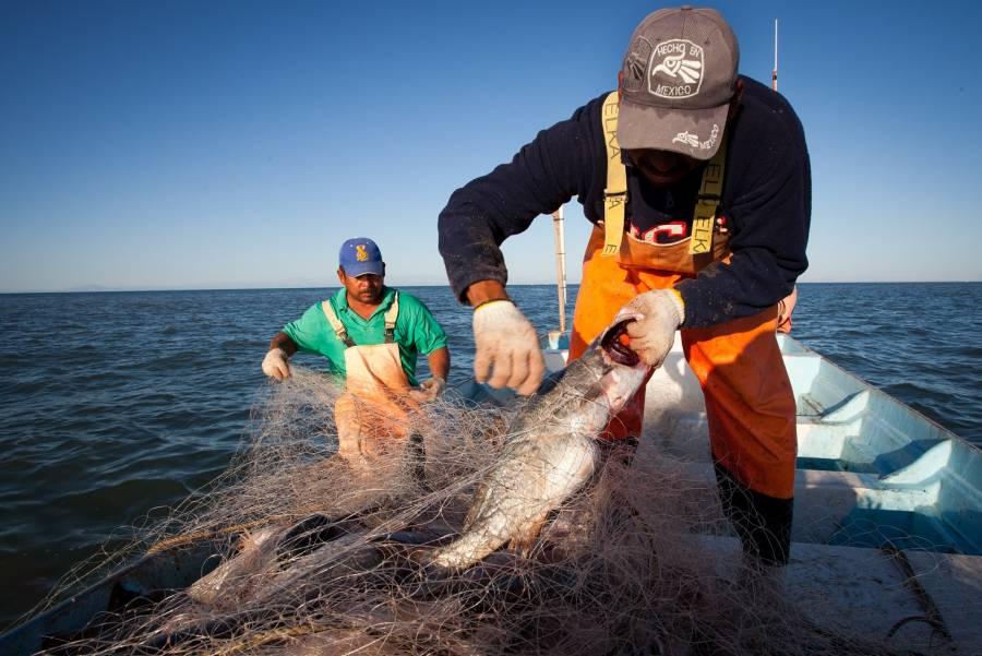 Gobierno de México reconoce actividad pesquera y acuícola en la seguridad alimentaria nacional