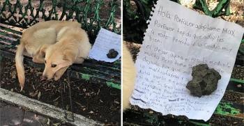 Boston el perrito abandonado en banca de Coyoacán fue rescatado
