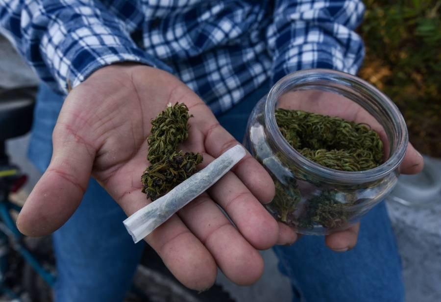 Regulación del cannabis será una gran oportunidad para pequeños productores: CNA
