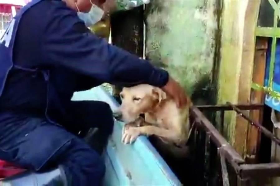 Secretaría de Marina revela los nombres de perros rescatados en Tabasco