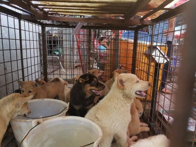 ¡Lomitos a salvo! China dejaría de consumir carne de perro