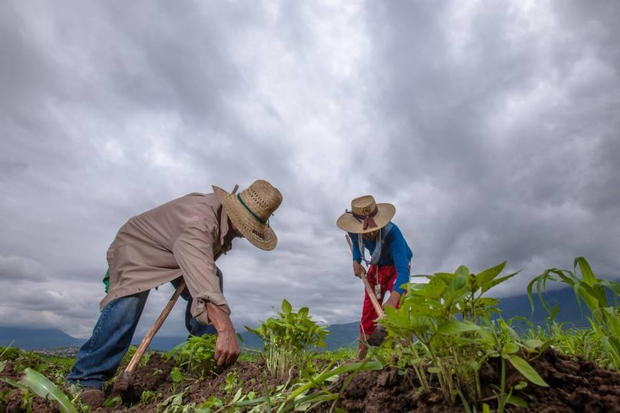 Extienden Programa Fertilizantes para el Bienestar en Morelos, Puebla y Tlaxcala