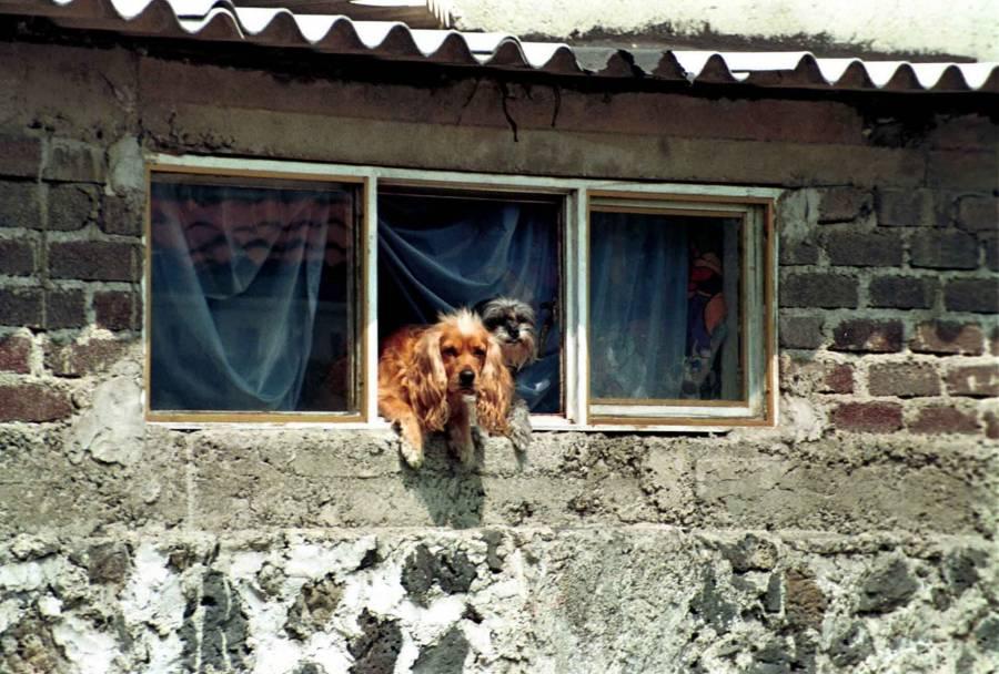 """Agricultura: """"Los animales no representan riesgo para la diseminación del COVID-19"""""""
