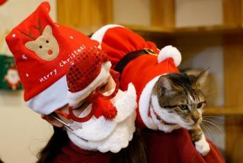 Gatos rescatados se visten de Papa Noel en Corea del Sur