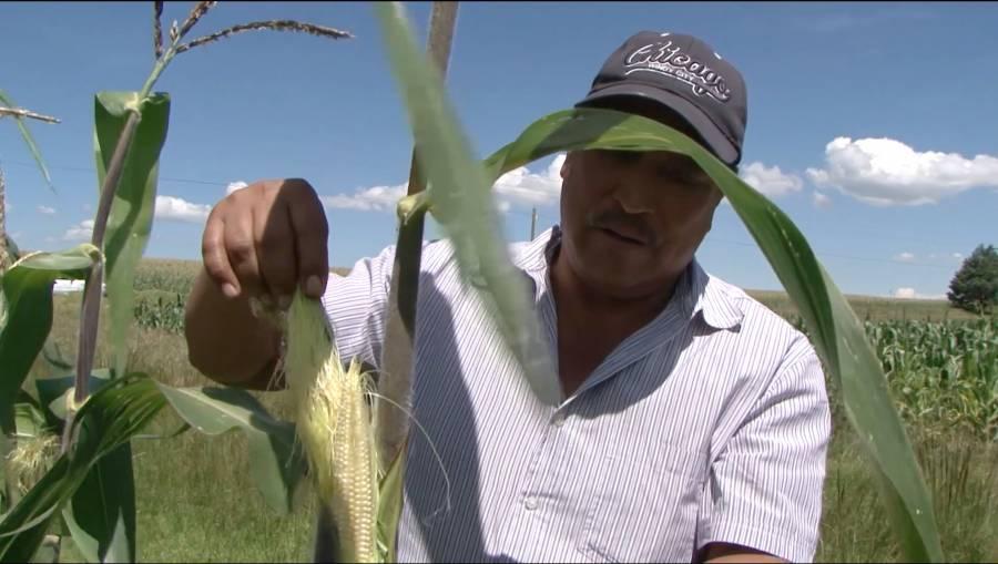 Impulsa Agricultura plan para productores afectados en Tabasco