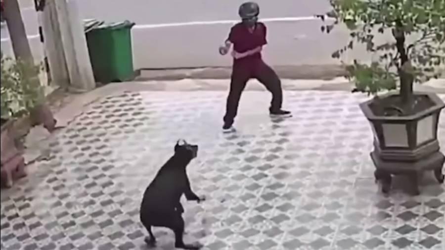 Al estilo de Karate Kid, hombre se defiende del ataque de perros