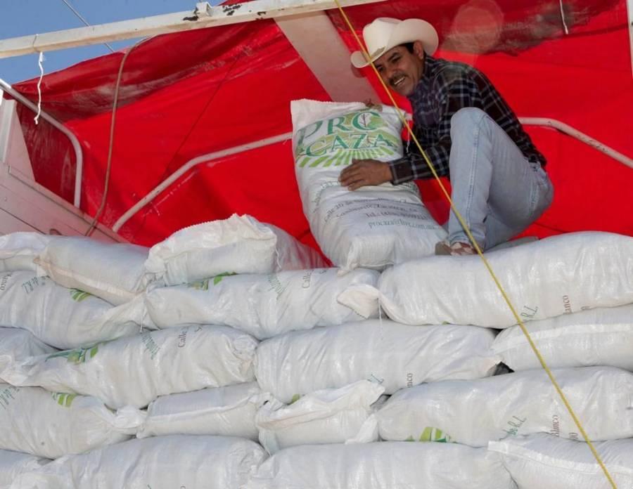 Producción agrícola crece y alienta economía golpeada por pandemia