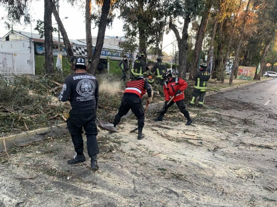 Ciudad de México registró fuertes vientos esta madrugada; reportan caída de árboles