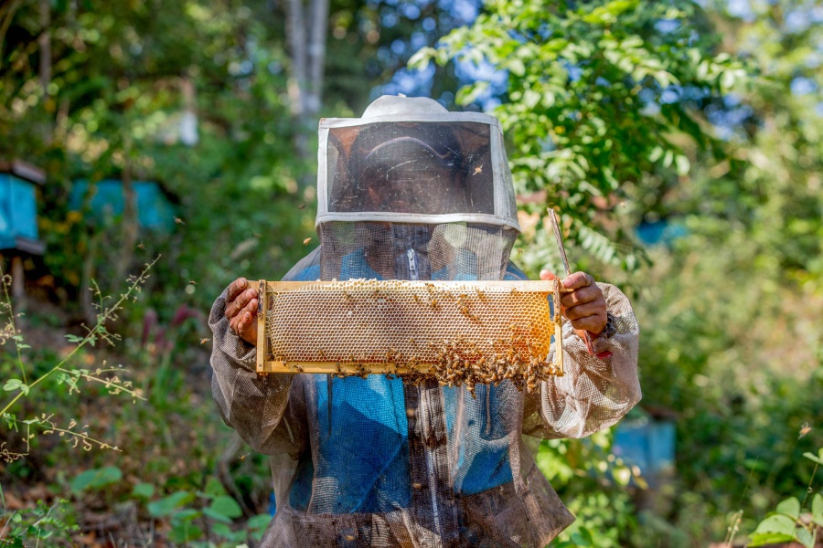 Crece 3.3% exportación de miel mexicana: Agricultura