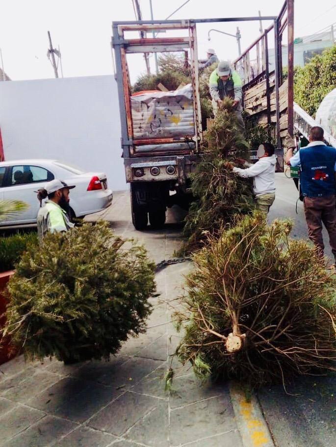 Piden reciclar y no arrojar a la calle arbolitos de Navidad